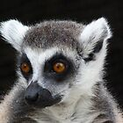 A Favorite Ring-tailed Lemur Portrait by Margaret Saheed