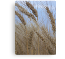 The Heads of Wheat Canvas Print
