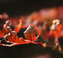 Autumn Leaves by mthirlwell