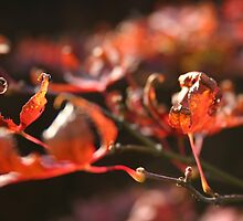 Autmn Leaves 2 by mthirlwell