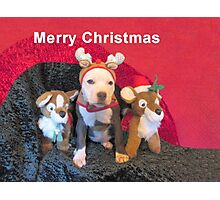 Mee Mee The Blue Nosed Reindeer Photographic Print
