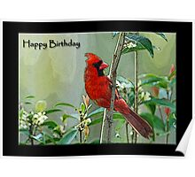 Happy Birthday Cardinal Card Poster