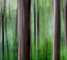 Forest by Jackie Cooper