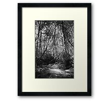 Stream in Trees, Victoria Framed Print