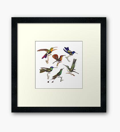 Six Hummingbirds Antique Print Framed Print