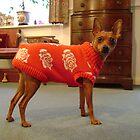 Small dog nasty christmas present. by jabberwocky