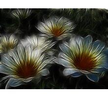 Daisy Art Photographic Print