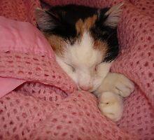 Sleeping Cat by jabberwocky