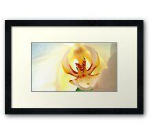 White Orchid 1 Framed Print