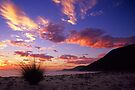 Dawn - Five Mile Beach by Travis Easton