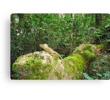 Rainforest dragon Canvas Print