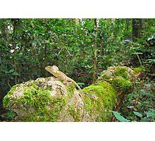 Rainforest dragon Photographic Print