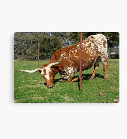 The grass is always greener on the other side of the fence . . .  Canvas Print