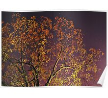 Chilly Autumn Nights Poster
