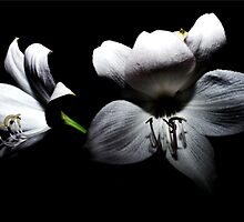 Flowers by JeanSchwarz