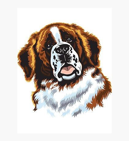 saint bernard head Photographic Print