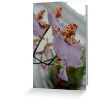 Glasshouse Orchid Greeting Card