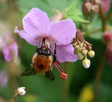 Bee Busy by Mibby