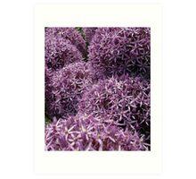 Allium pom poms Art Print