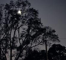 Moonlight by kitaemirae