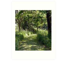Summer Woodlands Art Print