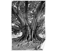 Tree near Sydney Opera House. Poster