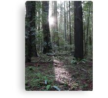 redwood dawn Canvas Print