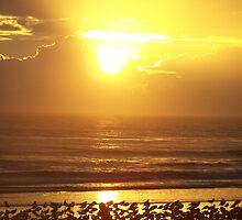 Daytona Dawn by JLPhotos