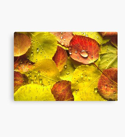 A Touch of Red Canvas Print