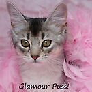 Glamour Puss! by sarahnewton
