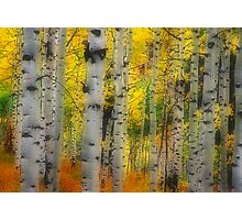 Aspen Dreams Photographic Print