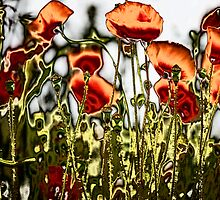 Poppies by Ramona Farrelly