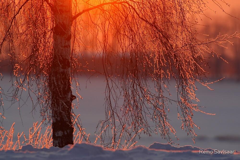 Winter magic by Remo Savisaar