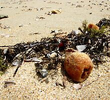 Flotsam and ... by Sybelle