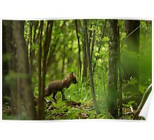 Red fox puppy in forest Poster