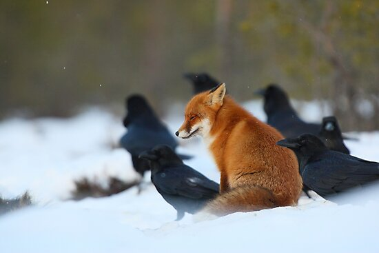 Moment with ravens by Remo Savisaar