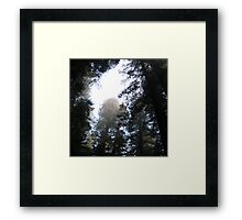 the canopy Framed Print