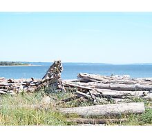 Driftwood Ocean View Photographic Print