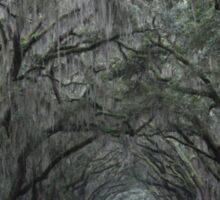 Wormsloe Plantation Savannah Sticker