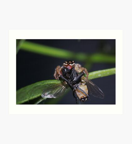 Jumping spider with prey Art Print