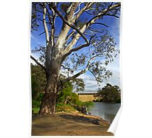 Murray River at Lake Hume Poster