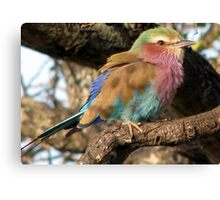 Lilacbreasted Roller (Troupant) Canvas Print