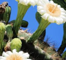 Flowering Cactus Sticker