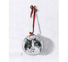 Christmas cat Photographic Print