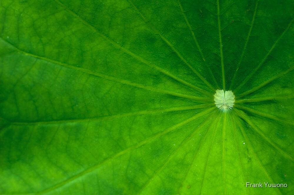 Lotus by Frank Yuwono