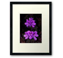 Purple Palagonia Framed Print