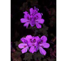 Purple Palagonia Photographic Print