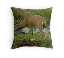Sneeky Buck Throw Pillow