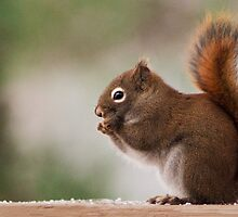 Red Squirrel by Simon Fallon