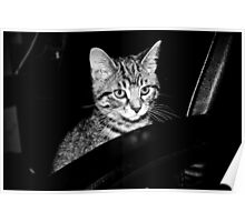 Black and White Kitten Photography Poster